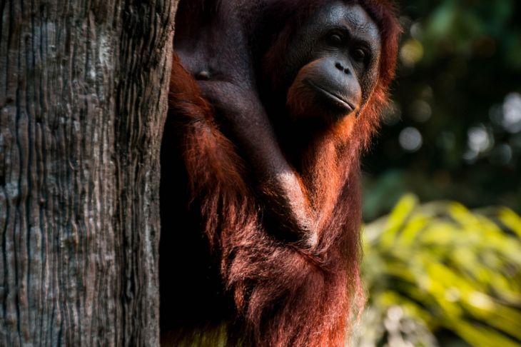 Fotograferen van dieren doe je met verstand